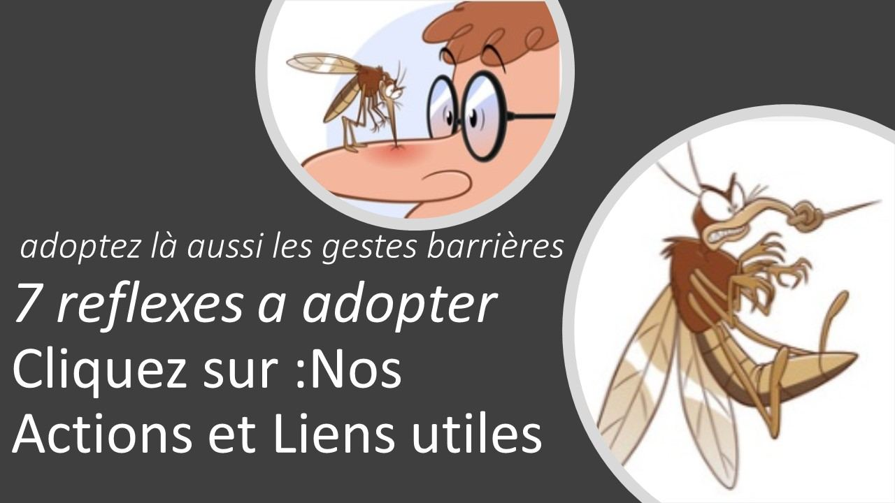 adopter-moustiques-jpg